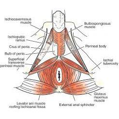 Taller: coneix i cuida el teu perineu masculí.
